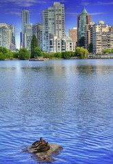 Ducks in Stanley Park and Vancouver Skyline (HDR) (Knowsphotos) Tags: travel canada nature skyline vancouver ducks stanleypark hdr
