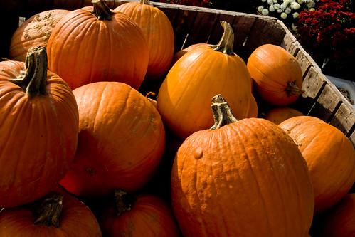 Box O' Pumpkins