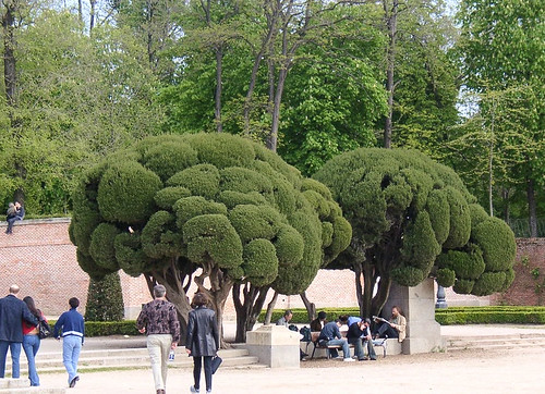 Trees & People in Retiro Park Madrid