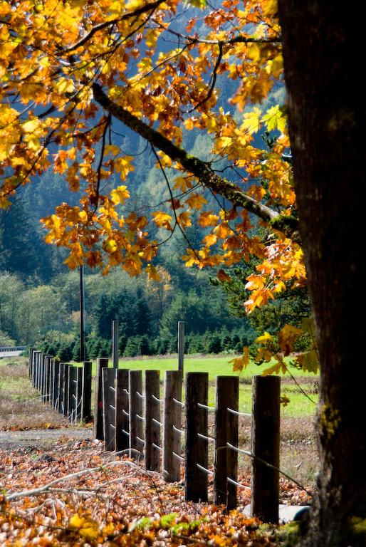 2008-10-18 Portland - Tillamook-43