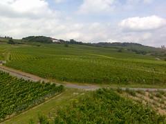 Rdesheim vineyard 1 (lanalanalana) Tags: germany rdesheim rhineriver