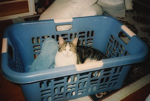 Cat In Laundry Basket. Cat in laundry basket