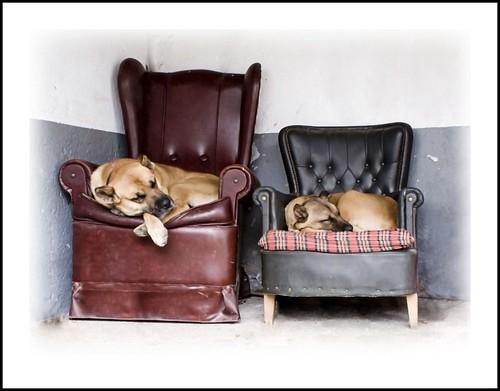 En los sofas horizontal