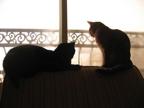 Omar (l) and Petal (r)
