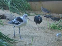 aviary9224 (marymactavish) Tags: california usa nature monterey unitedstates montereybayaquarium science aviary montereycounty pleaseaddtags november162008 donorsmorning