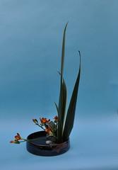 Valerie's Ikebana 19 Nov 08 (l1nda1) Tags: flower art floral ikebana flowerarrangement sogetsu japaneseflowerarrangement