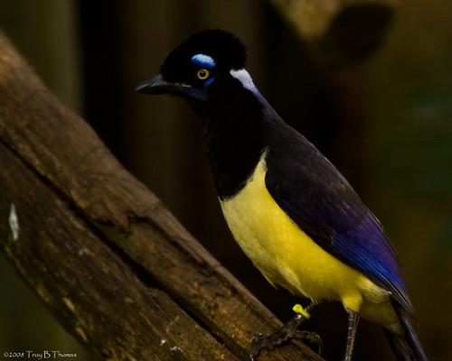 20081126_Bird1