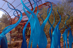 (ONE/MILLION) Tags: travel blue light vacation arizona cactus orange plants color green chihuly art love nature glass colors phoenix birds garden landscape botanical outdoors interesting artwork rust colorful flickr bright display crafts blossoms arts visit exhibit event blooms tours find exibit onemillion phoenixbotanicalgarden williestark botanicalgardenphx chihulyglassexibit