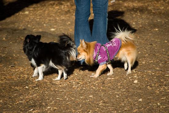 yoyogi dogs_0924