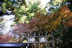 (ddsnet) Tags: autumn plant leaves japan sony autumnleaves  nippon  nara autumnal nihon 900  backpackers         naraken  leaves narashi  autumn autumn   leaves 900