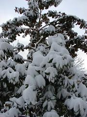 Christmas Snow fall