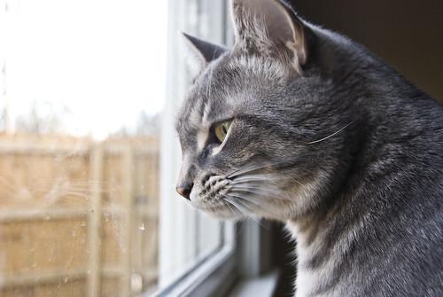 Gus sees a birdie