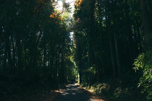 養老渓谷 林の中の道