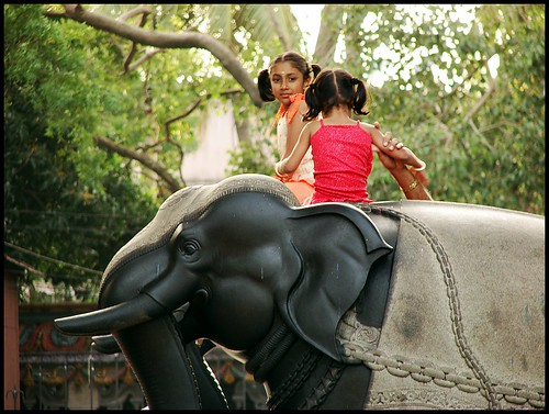 Kids Playing on a Elephant
