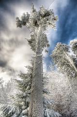 Icy tower (magicmulder) Tags: winter snow hessen hdr eschwege canonefs1022mmf3545usm hohermeisner