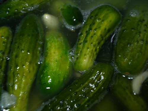 After a week in the garlicky brine the cucumbers are still bright green.