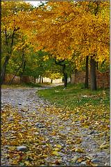 Autumn (seyed mostafa zamani) Tags: autumn art colors beautiful canon leaf nice colorful iran dreams iranian           450d