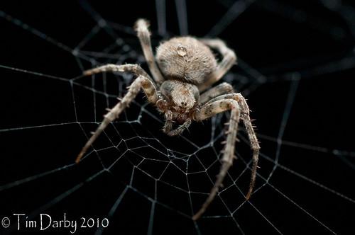 2010-05-22 - Spider-80