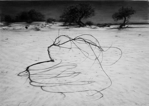 Cindy Wright, Desert graffiti, 2008