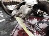 Flammable (Charlotte Lawrence Arts) Tags: white signs black anime dark skulls skeleton skull hands ribs bones ribcage bone spine rib skeletons spines ram flamable