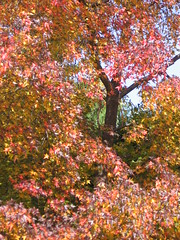 Rainbow tree (bageriab) Tags: flowers color tree fall nature leaves canon happy rainbow peace seasonal peaceful change revealing tonal rainbowtree