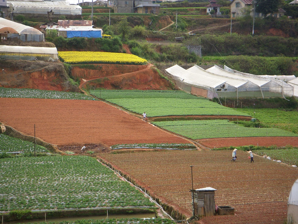 campos de cultivo de dalat