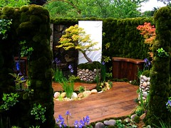 The Japanese Moss Garden at the 2007 Chelsea Flower Show (UGArdener) Tags: blue trees england green london english japan gardens landscape design moss spring rocks chelsea unitedkingdom britain may bonsai redwood ferns japanesegardens springtime japanesemaples gardendesign chelseaflowershow siberianirises chelsea2007courtyardgardens englishtravel