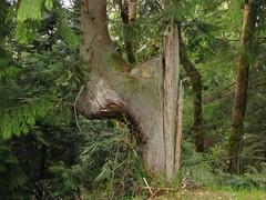 Funk'd up tree