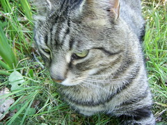 """""""what's that over there?"""" (Keith Duckworth) Tags: cat jinx"""