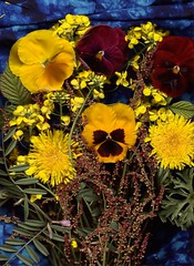 (lucidcats) Tags: flowers blue shadow red plants plant flower green art leaves yellow vancouver canon dark real washington leaf shadows state fabric wa canoscanlide50 adobephotoshopelements20 thebestyellow