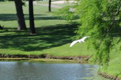 DSC_0867 (rich.reierson@verizon.net) Tags: golf papyrus 2008 isis