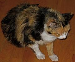 Brigid on bath day