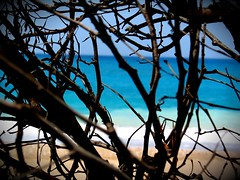 the wild ones (tallawah75) Tags: ocean blue trees light sea summer sun black beach sand turquoise branches ltytr1