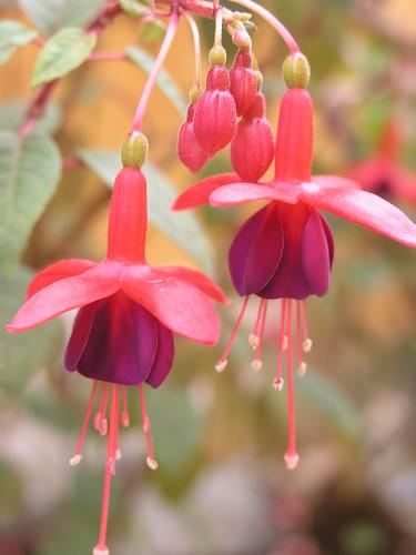 Las Plantas con Flores El tipo de plantas con flores