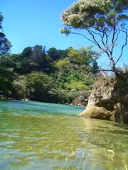 New Zealand - Abel Tasman NP (Marc Veraart) Tags: newzealand seals picton abeltasmannationalpark