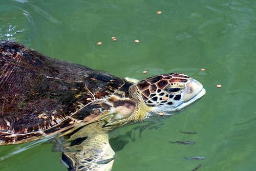 turtle 20