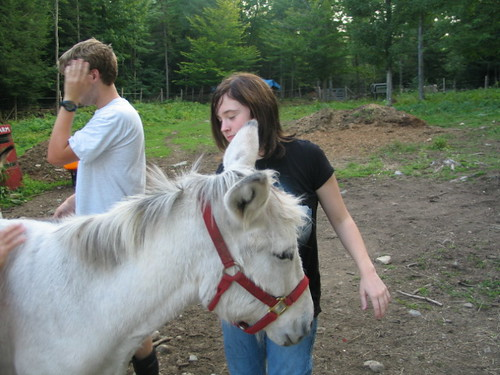 Hi there Donkey