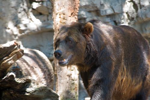 Bear_IMG_0232