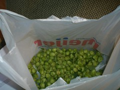 HOPS (zero7068) Tags: homebrewing hops ratebeer northernbrewer
