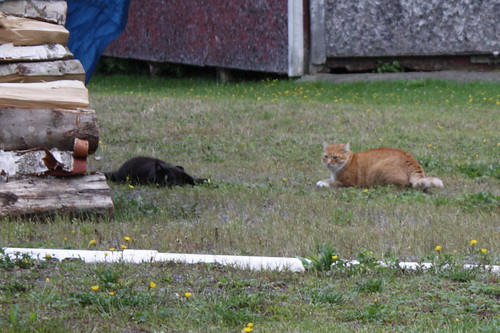 Cats at the Woodpile - 26