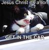 lion_getincar (DiscoWeasel) Tags: get car cat feline funny christ lol misc jesus internet humor lion kitty meme scared noob wastesometime
