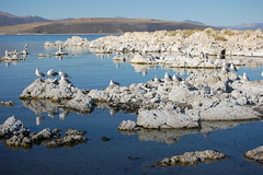20080912 Gulls on Tufa