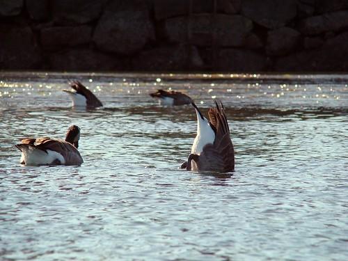 2008-09-14 Gorge Portage 022