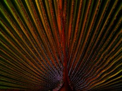 Texturas 7 (rafael-angel) Tags: friends artisticexpression hiddentreasure abigfave isawyoufirst flickrdiamond citrit people´schoice exemplaryshotsflickrsbest colourartaward colourartawards goldsealofquality shining☆star bluespointofview spiritofphotography oléquebonito allkindsofbeauty nonstiamoapettinarelebambole grupomedalhadeouro 469photographerawards albardelmondohappyhouremostrefotografiche flickrpopularphotographer doubledragonawards lesamisdupetitprince abstractartawardspost1award4muralx thelihgtpainterssociety