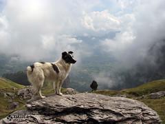 Estive de Lagne (olive le basque_64) Tags: sky dog chien france rock stone trekking french freedom rocks village smoke garde aot seul berger randonne valle aspe pyrnnes barn pyrennees labri lescun pyrennes francelandscapes