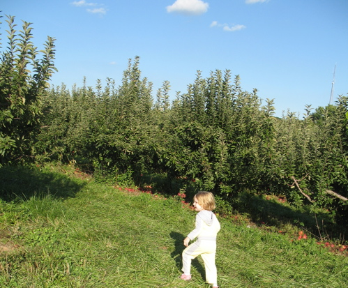 Apples08 7