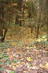 Овраг_2_макро_DSC07649 (kanat_alimjanov) Tags: осень белка пушкин зеленоград