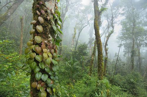 Timpohon Mesilau Trekking
