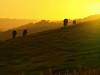 Dusk  On a Cornish Hillside (saxonfenken) Tags: sunset motif geotagged cornwall cows dusk hill explore superhero thumbsup sb e510 980 bigmomma gamewinner 6996 supershot challengeyou challengeyouwinner cy2winner june2008 friendlychallenges ultrahero thechallengefactory novavitanewlife pregamewinner gamesweepwinner 6996sun