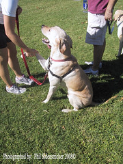 Still Friends (phil_sidenstricker) Tags: dog canine donotcopy valleyofthesunphoenixmetro upcoming:event=981998 southmountainfarmphoenixazusa